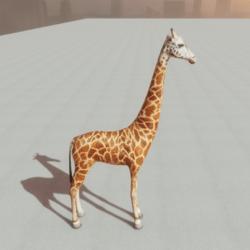Animals - Giraffe