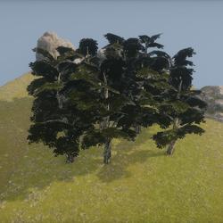 Dark Tree - Little Forrest ++ Dunkler Baum - Wald