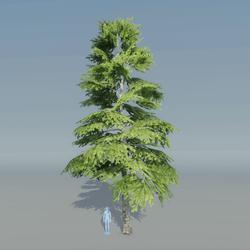 Fir Tree 4