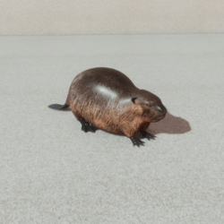 Animals - Beaver