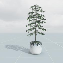 Pot Plant Large 3