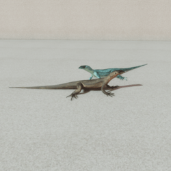 Animals - Lizard