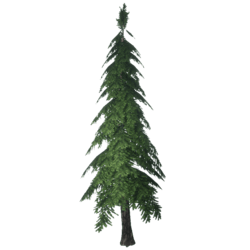 Forest Pine 2