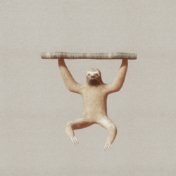 Animals - Sloth