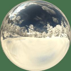 Pine Forest Day Ground Snow