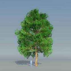 Maple Tree Dark Green 4