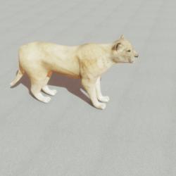 Animal - Lion Female