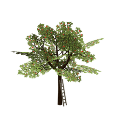 Appletree with ladder