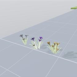 Crocus flowers (set 3 item)