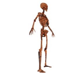 Animated Rotten Skeleton