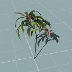 Tropical Tree_2