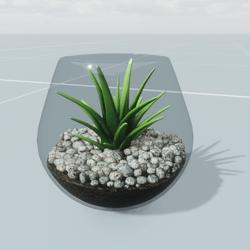 Succulent in Glass