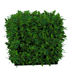 Hedge Small - Green