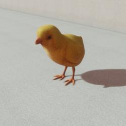 Animals - Baby chicken