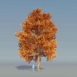 Maple Tree Autumn B 4