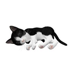 Sleeping kitten - black white