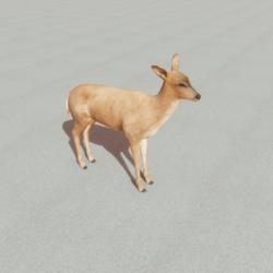 Animals - Deer