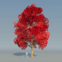 Maple Tree Red 5