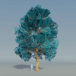 Maple Tree Blue 5