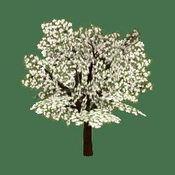 Apple-Blossom Tree