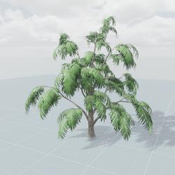 Albizia Tree 3