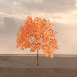 Maple fall tree