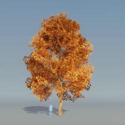Maple Tree Autumn B 2
