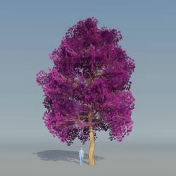 Maple Tree Purple 4