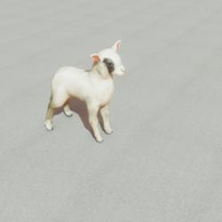 Animals - Lamb