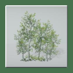 Birch Tree Group