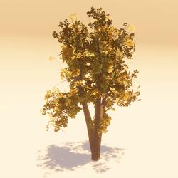 Animated Maple 01