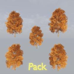 Maple Tree Pack Autumn B
