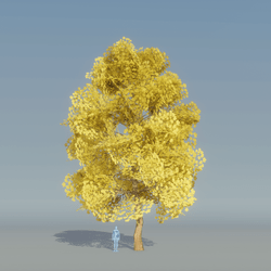 Maple Yellow Tree 3