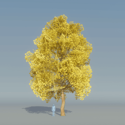 Maple Tree Yellow 4