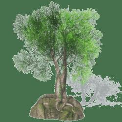 Rock Tree 1