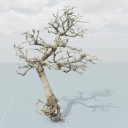 Dead Tree 3