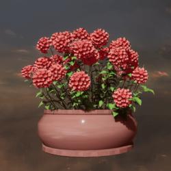 pot Hydrangea pink