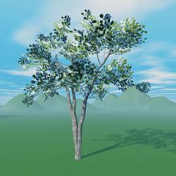 Dogwood Tree 1