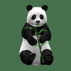 Little Giant Panda Bear