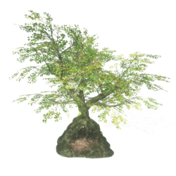 Secret Tree-Cave 1