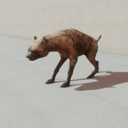 Animals - Hyena