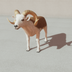 Animals - Ram