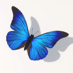 Skye Butterfly 2 Animated (Type 2 - linear flight path)