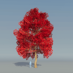 Maple Tree Red 4