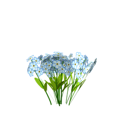 forget-me-not - flowers