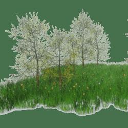 Grass Flower Forest Ground