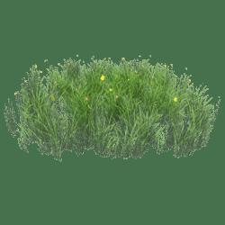 Grass-Flower-Field