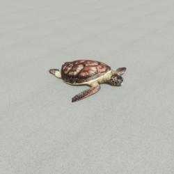 Animals - Sea turtle