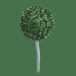 Ball topiary bush