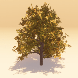 Animated Maple 03